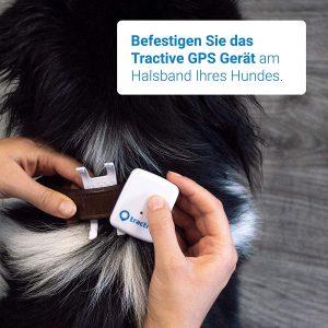meilleur traceur GPS pour chien